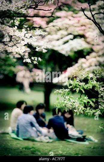 Family picnic in a Japanese garden Stock Foto