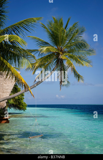 Rope swing on South Ari Atoll in Maldives near India Stock Foto
