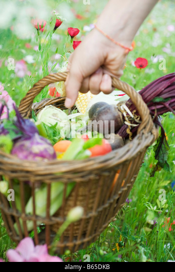 Hand picking up wooden basket of fresh produce Stock Foto