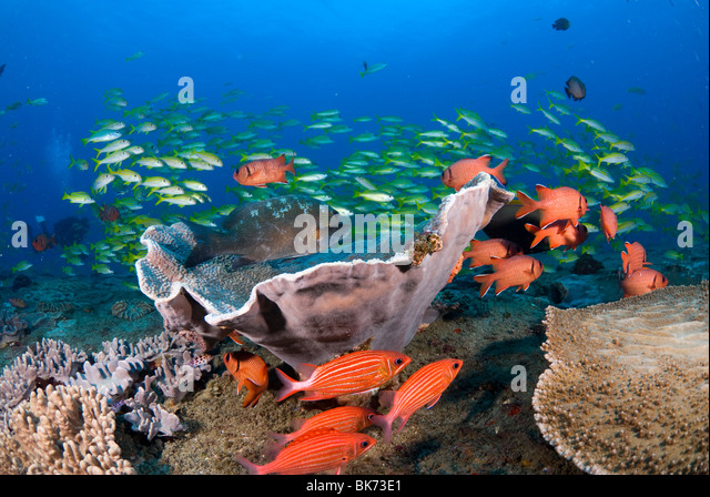 Colorful coral reef scene, South Africa Stock Photo