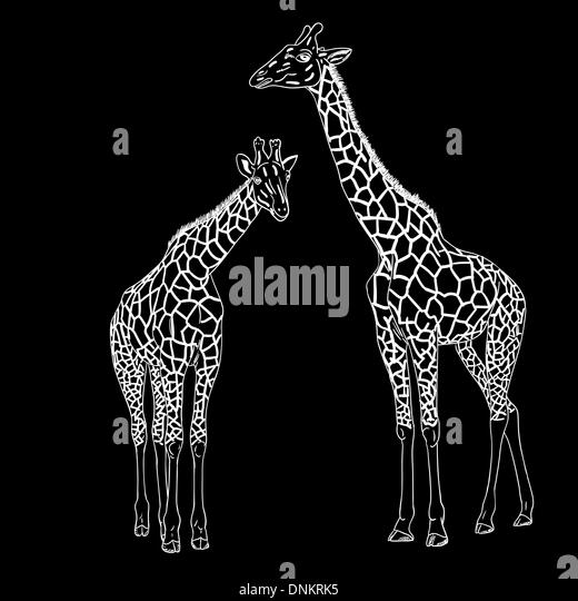Two giraffes. Vector illustration. Stock-Vektorgrafik