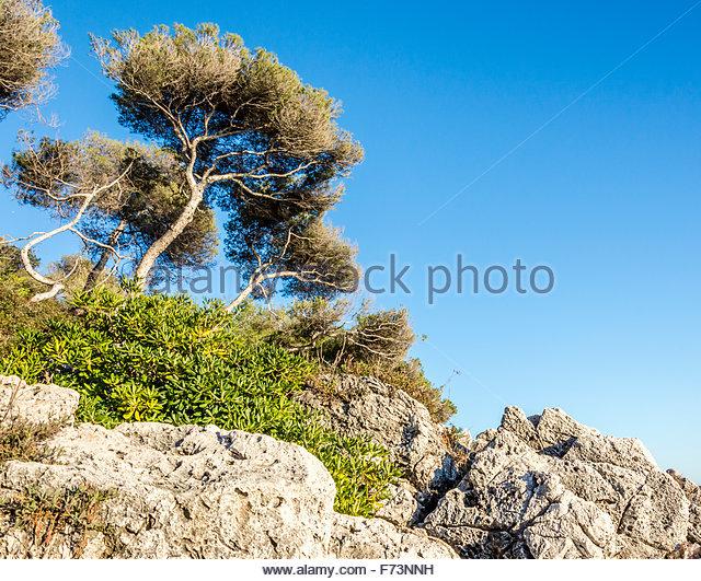 Image hotlink - 'http://c640c.alamy.com/640c/f73nnh/trees-in-cap-martin-f73nnh.jpg'