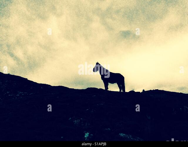 Silhouette of horse in landscape Stock Foto